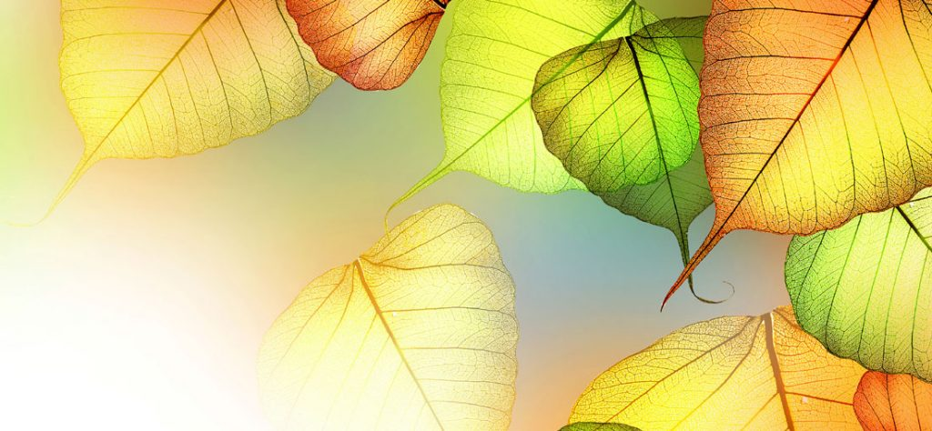 Autumn-Leaves-Banner-3
